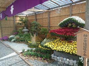 菊花展造園花壇1