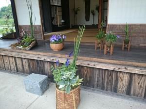 桔梗や紫陽花の寄植
