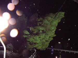台風21号 東部 山手幹線倒木